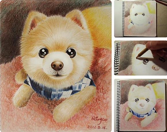 分享彩铅画狗狗的步骤一二三